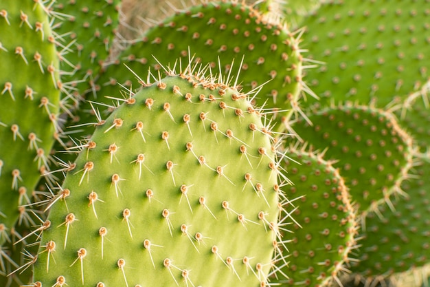 Front view of cactus plant with spikes