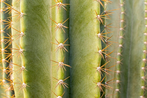Front view of cactus plant