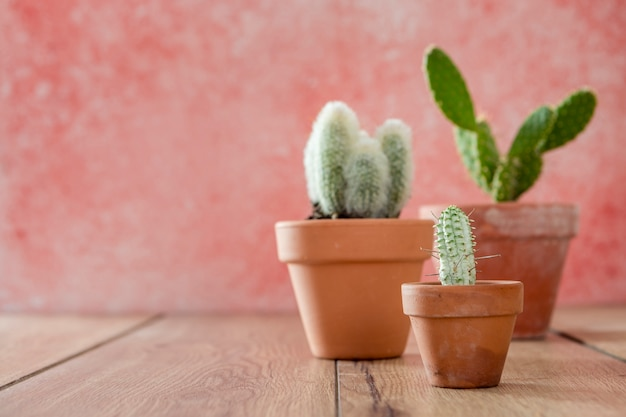 Front view cactus pots on wooden table