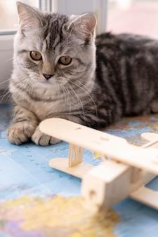 正面図の猫とぼやけた飛行機のおもちゃ