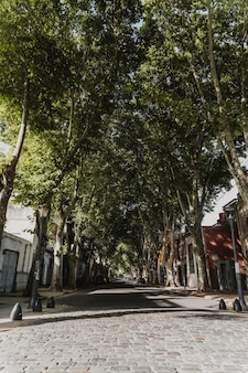 Front view of city street view with trees and buildings
