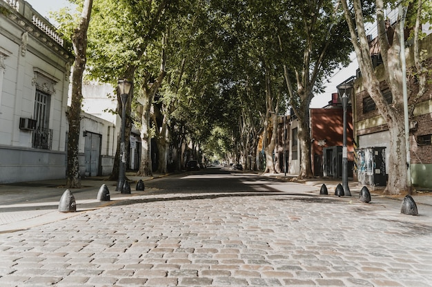Front view of city street view with trees