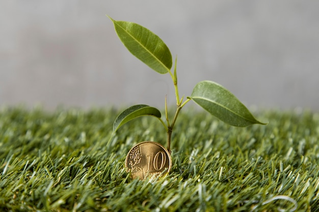 Front view of coin on grass with plant