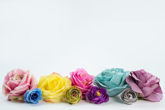 Una vista frontale rose colorate fiori belli ed eleganti su bianco, pianta fiore di colore