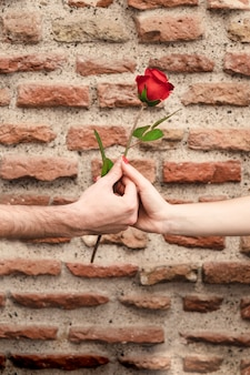 Front view of couple hands sharing a rose