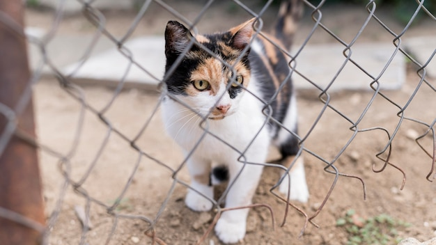 Front view of cute cat outdoors behind fence