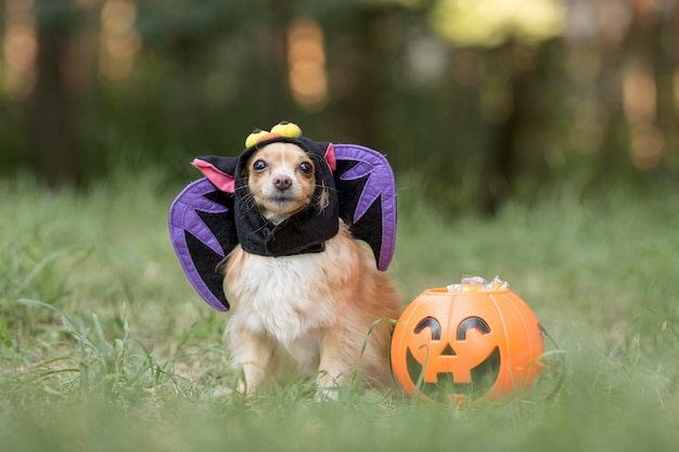 Front view of  cute dog in bat costume
