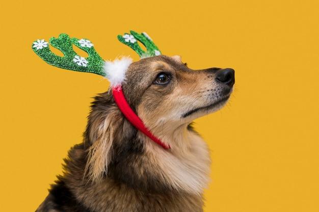 Vista frontale del simpatico cane con il concetto di natale