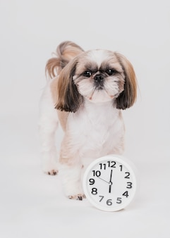 Front view cute dog with clock
