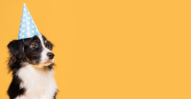 Вид спереди милая собака с копией пространства