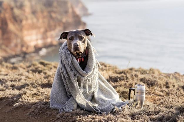 毛布で覆われている正面図の犬
