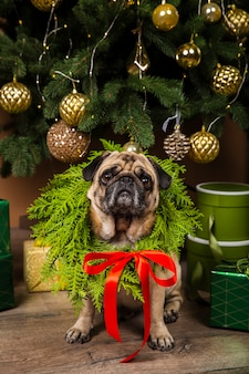 Front view dog next to christmas tree