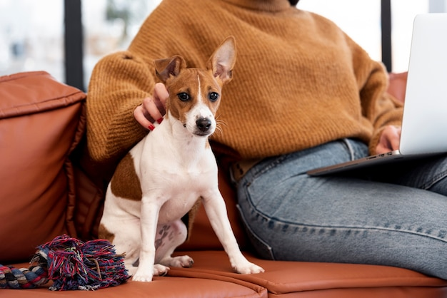 Front view of dog on the couch with owner