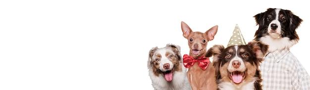 Вид спереди собак в костюмах