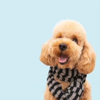 Front view domestic cute dog with scarf