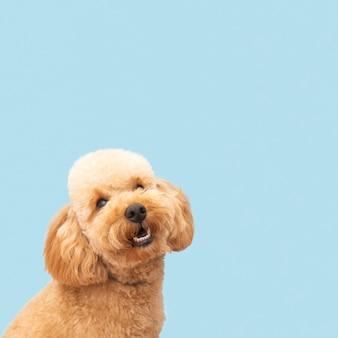 Вид спереди домашняя милая собака