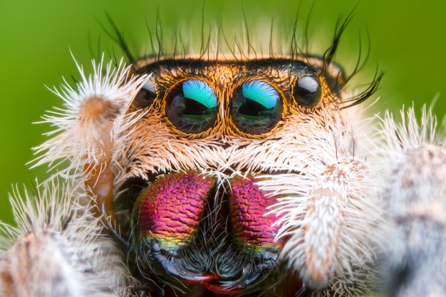 Front view of extreme magnified jumping spider head and eyes with green leaf background