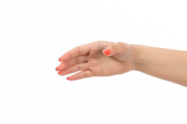 A front view female hand with colored nails raised hand on the white Free Photo