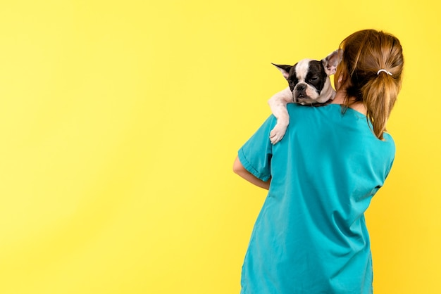 Front view of female veterinarian holding little dog on yellow wall
