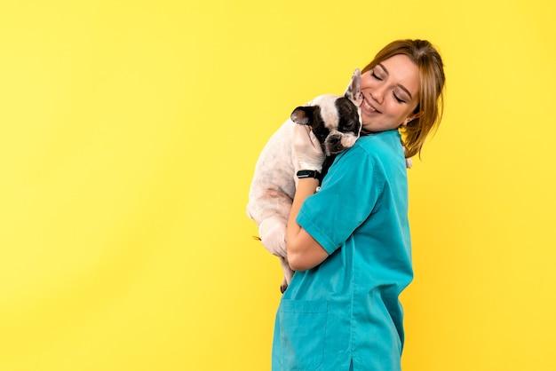 Vista frontale del veterinario femminile osservando il piccolo cane sulla parete gialla