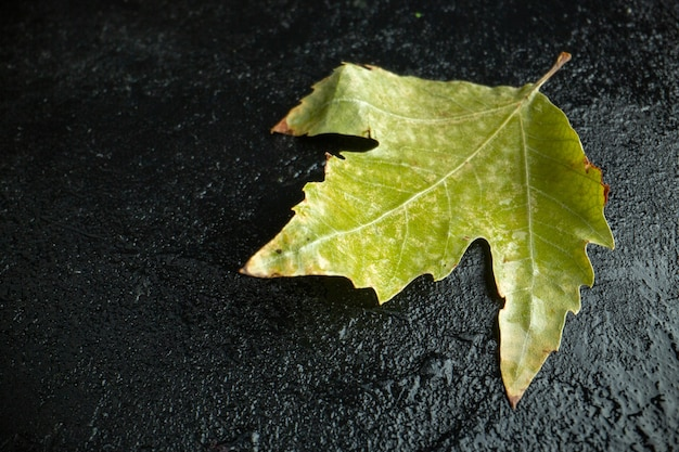 Front view green leaf on a dark background tree autumn color photo