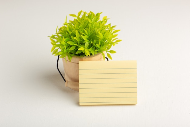 Pianta verde vista frontale con carta su superficie bianca
