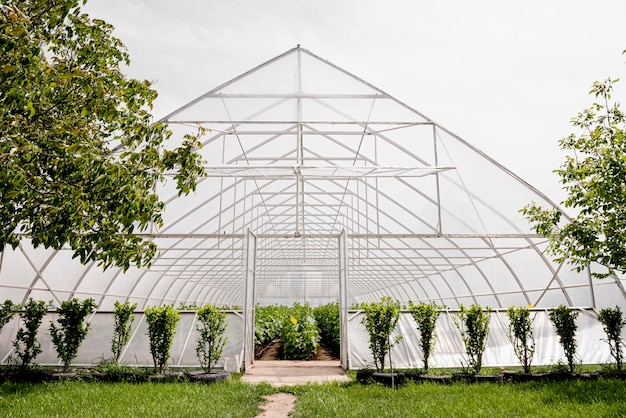 Front view greenhouse and trees
