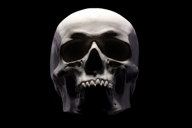 Front view of gypsum model of the human skull