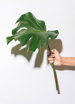 Front view hand holding foliage leaf