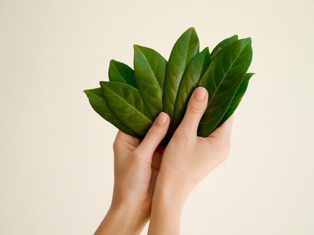 Front view of hand holding leafs