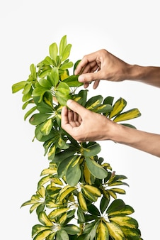 Front view hands arranging green plant