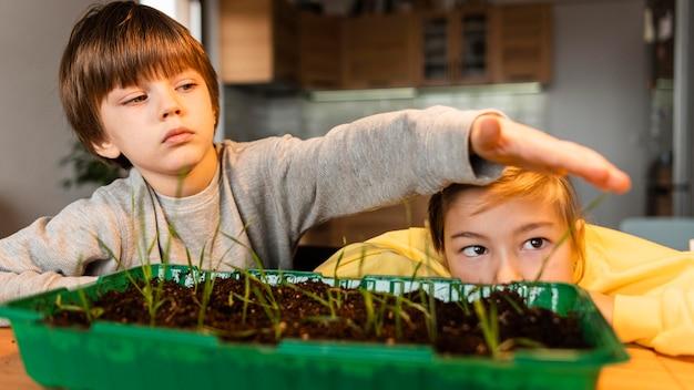 Vista frontale dei bambini che guardano i germogli crescere a casa