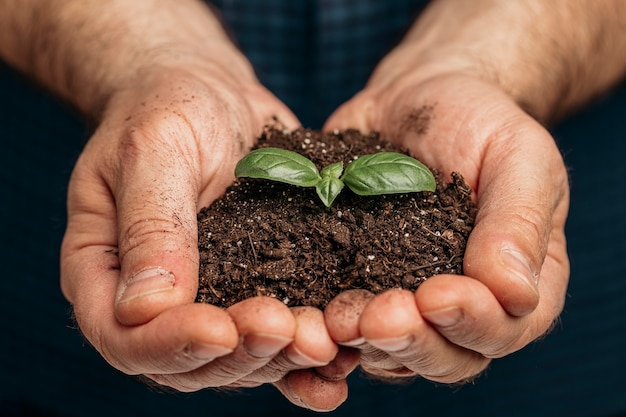 Front view of male hands holding soil and growing plant