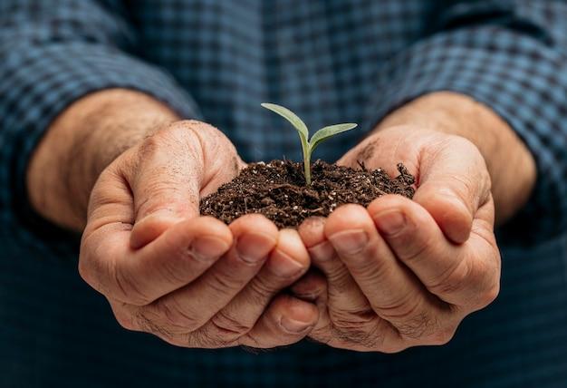 Vista frontale delle mani maschii che tengono terreno e piccola pianta