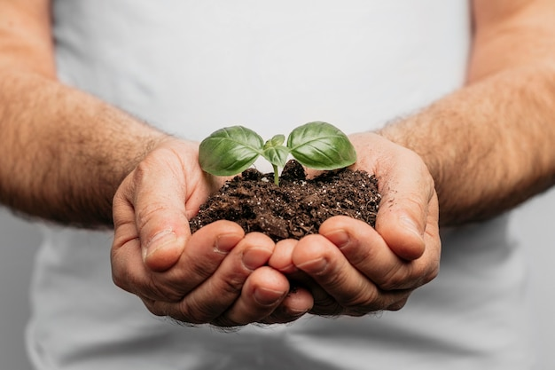 Front view of male hands holding soil and plant