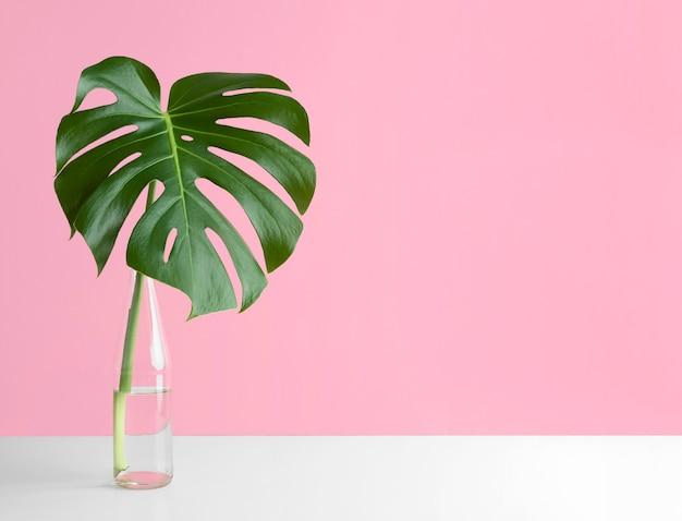 Front view minimal tropical plant composition