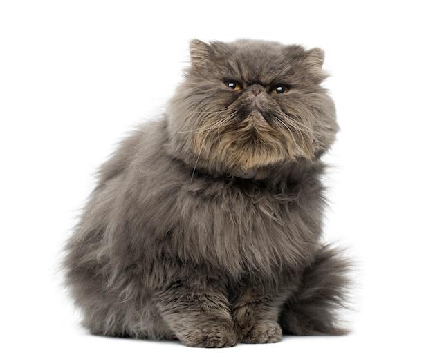 심 술 페르시아 고양이 앉아의 전면보기에 격리 된 흰색을 찾고