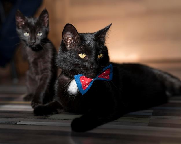 Вид спереди красивой черной кошки с бабочкой