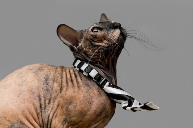 Вид спереди концепции красивой кошки