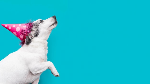 복사 공간이 아름 다운 강아지의 전면보기
