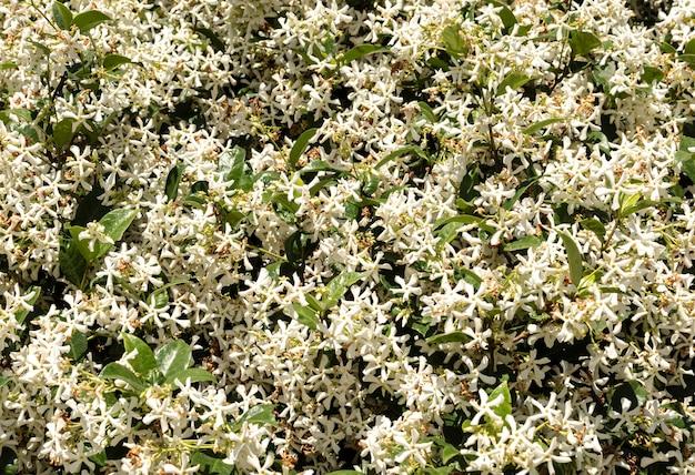 Вид спереди красивых цветов с листьями