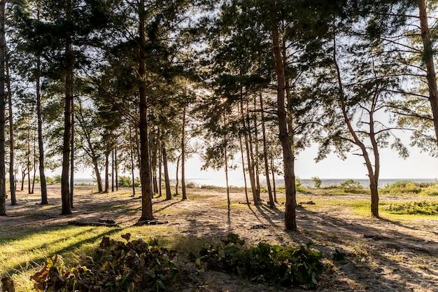 Вид спереди на красивый пейзаж с деревьями и солнцем
