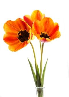 赤いチューリップの花束の正面図