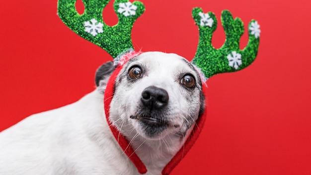 クリスマスのコンセプトを持つかわいい犬の正面図