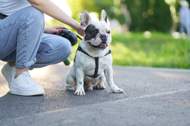 道路に座って脇を見ているかわいいオスのフレンチブルドッグの正面図。ひもを使ってペットを抱き、近くの都市公園で休んでいる認識できない女性の飼い主。家畜、ペットのコンセプト。