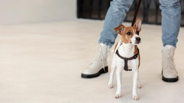 Вид спереди собаки на поводке