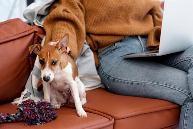 女性とソファの上の犬の正面図