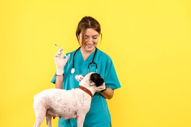 노란색 벽에 작은 개를 주입하는 여성 수의사의 전면보기