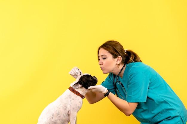 黄色の壁に小さな犬を観察している女性獣医の正面図