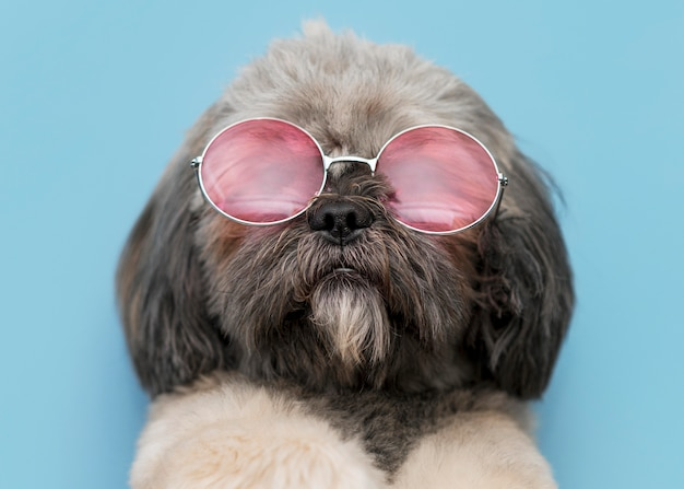 재미 있은 귀여운 강아지 개념의 전면보기